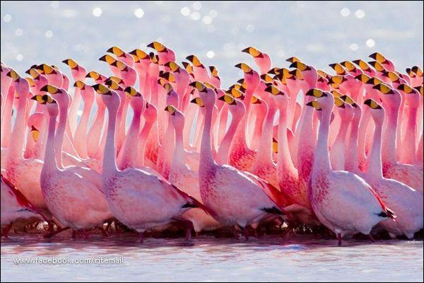 J'ai déjà fait le coup une fois, et ça a plutôt bien fonctionné, je vais donc en remettre une couche : Ces oiseaux sont des flamands roses !