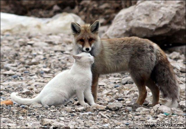 Cette photo est honteusement truquée, le renard et le chat ne peuvent pas être amis !