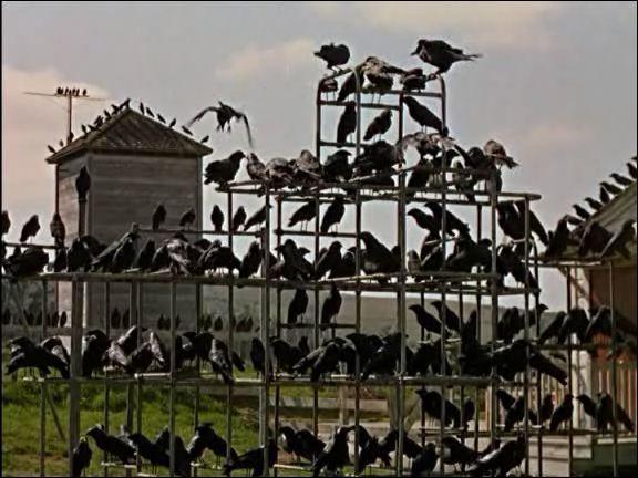 Les Oiseaux : horreur - 1963. Qui a réalisé ce film montrant les attaques inexpliquées d'oiseaux sur les habitants d'une petite ville en Californie ?