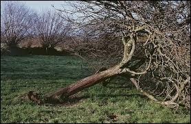 A quel personnage cet arbre vous fait-il penser ?