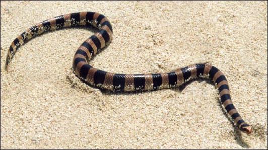 Qu'est-ce qu'un serpent de mer ?