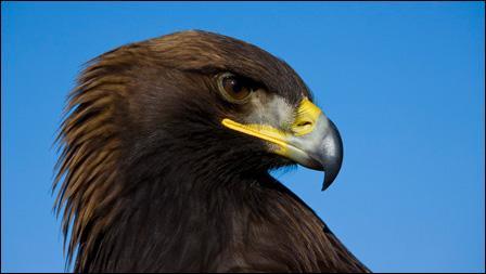 Qu'est-ce qu'un aigle ?