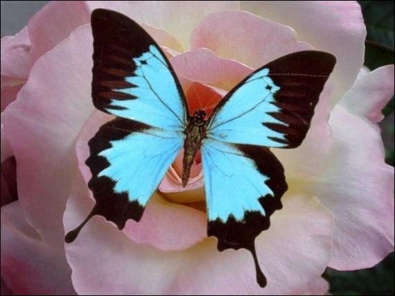 Qu'est-ce que l'effet papillon ?