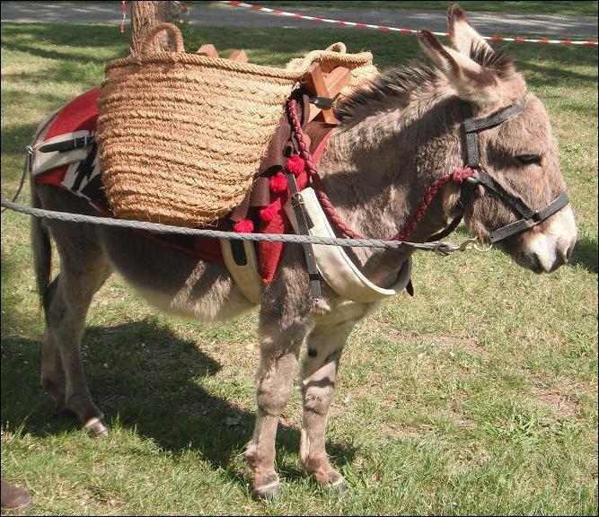 Qu'est-ce qu'un âne bâté ?