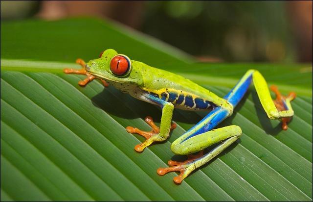 Qu'est-ce qu'une grenouille de bénitier ?