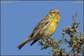 Quel est cet oiseau ?