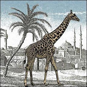 Ne vous faites pas un sang d'encre ! Regardez bien l'image : il y a une deuxième girafe. Est-elle anglaise ?