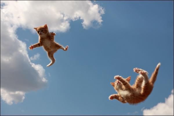 Les chats retombent toujours sur leurs pattes.