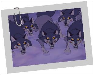 D'où viennent ces loups ?