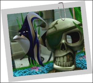 C'est le leader de l'aquarium chez le dentiste, qui est-ce ?