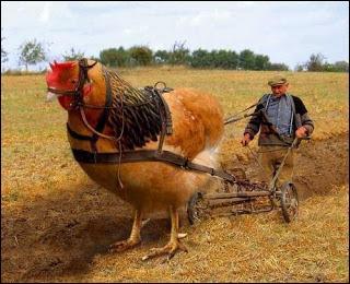 Ça tire, ma poule ! Des scientifiques ont résolu le célèbre paradoxe de l'œuf et de la poule. Alors, qui était avant l'autre ?