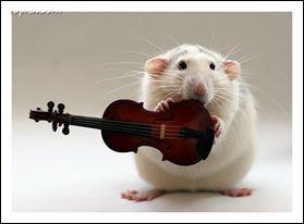 Cet animal est un musicien haut de gamme ! Il s'agit d'un grand violoniste :