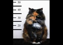 Au voleur ! Quand on fait un petit délit, cela veut dire qu'on peut en faire un plus gros. Quelle expression convient-elle le mieux à la phrase précédente ?
