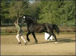Comment se nomme cette race de cheval ?