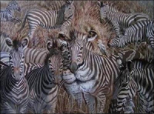 Éloignez-vous de votre écran et dites-moi quel animal voyez-vous à part les zèbres ?