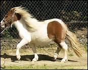 Et pour finir de quelle race est ce poney ?