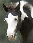 Et comment s'appelle cette marque blanche sur la tête du cheval ?