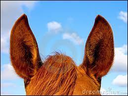 Comment peut-on décrypter l'humeur du cheval ?
