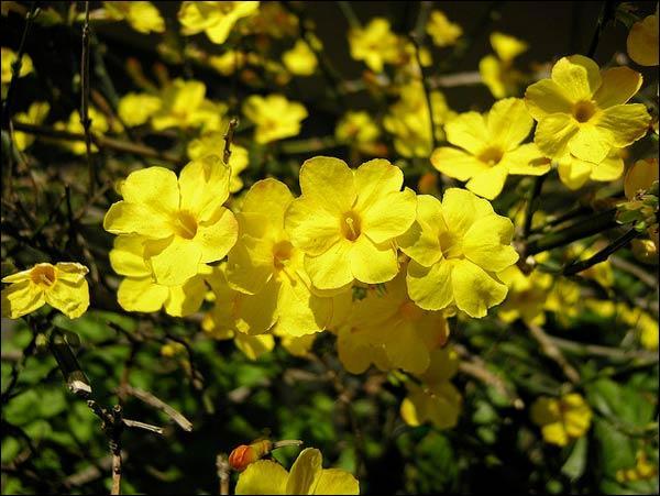 Comment s'appelle cette fleur, à l'odeur délicate ?