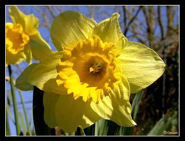 Quizz des fleurs jaunes quiz fleurs plantes nature for Les noms des fleurs