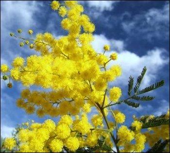 Quel est le nom de cette plante à l'odeur parfois entêtante ?