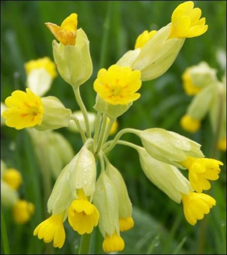 quizz des fleurs jaunes quiz fleurs plantes nature. Black Bedroom Furniture Sets. Home Design Ideas