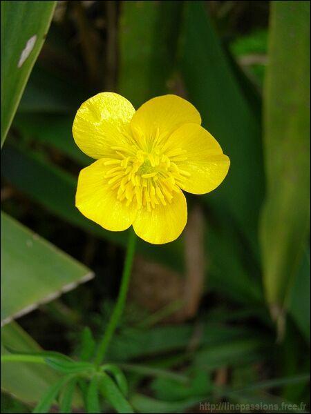 Quizz des fleurs jaunes quiz fleurs plantes nature for Fleurs et fleurs