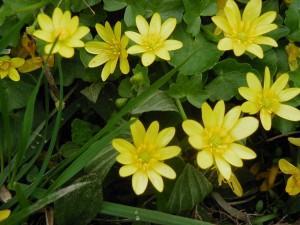 Des fleurs jaunes