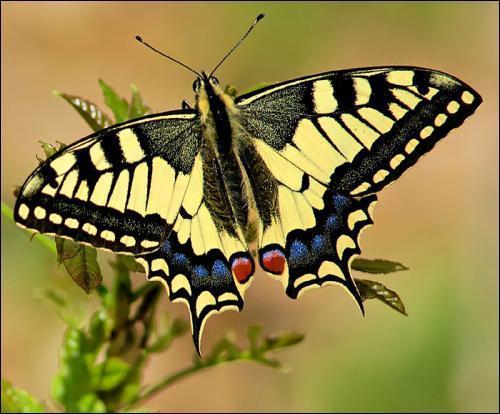 Les papillons de France