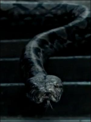 De quoi JK. Rowling s'est-elle inspirée pour créer le nom du serpent de Voldemort, Nagini ?