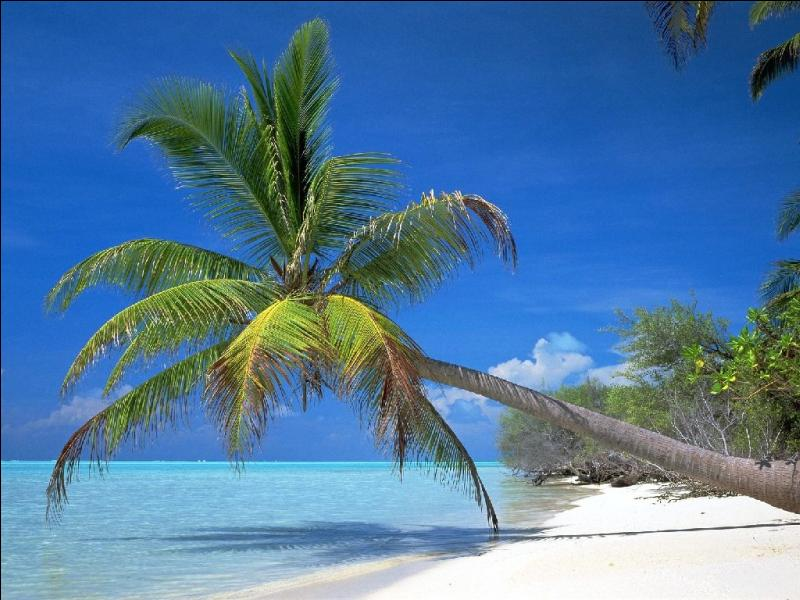 Qu'est-ce que le  palmier  symbolise le plus souvent ?