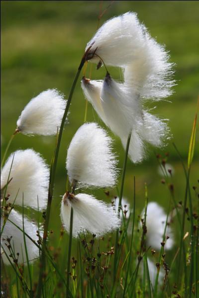 Quizz les pieds dans l 39 eau quiz fleurs plantes eau - Plantes qui poussent dans l eau ...