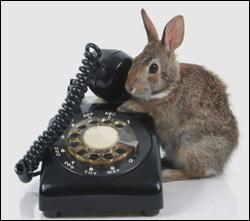 Je comprends mieux pourquoi on peut nous poser des lapins au téléphone ! Les numéros de téléphones surtaxés ont-ils leurs équivalents en non surtaxés ?