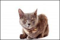 Quand les chats sont bernés, leur colère devient terrible ! Il s'agit d'un film français réalisé par Pascal Chaumeuil en 2010 :