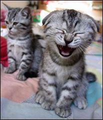 Quand les souris dansent, les chats rigolent ! L'une des deux seules villes au monde à avoir au moins un point d'exclamation dans son nom s'appelle :