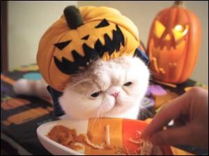 Au moins 5 pâtées immangeables par jour ! Un humain peut-il manger de la pâtée pour chats sans problème ?
