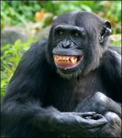 Souriez ! Sait-on pourquoi le gaz hilarant fait-il rire ?