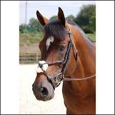 Ce beau cheval porte une muserolle...
