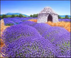 Cette plante violette très odoriférante se récolte en bottes en Provence. Quel est son nom ?