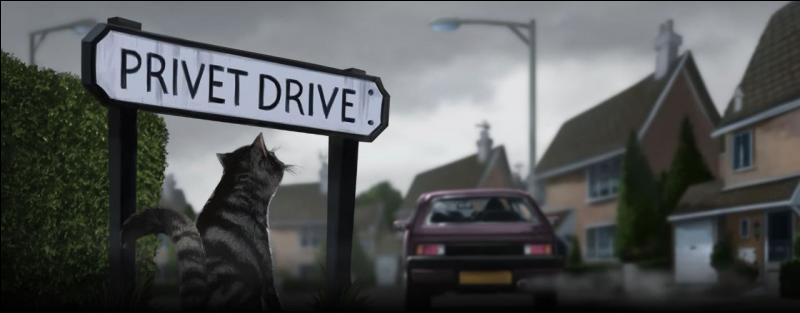 Au tout début du livre, que fait le  chat  la première fois que l'oncle Vernon le voit ?