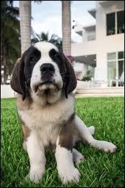 Comment s'appelle leur chienne ?