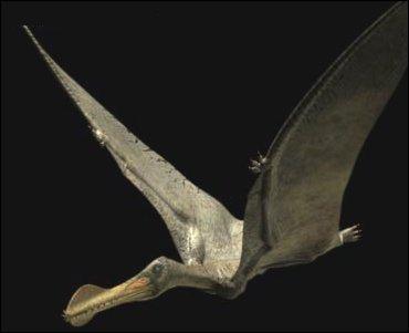 Comment se nomme ce reptile volant ?