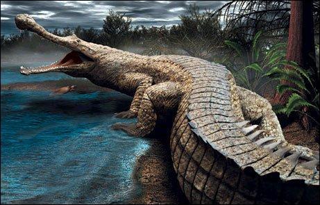 Comment se nomme ce crocodile ?