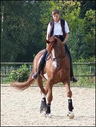 Comment est positionné un poney incurvé à gauche ?