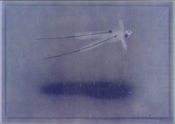 Lynch a crée une série de dessins à la craie.