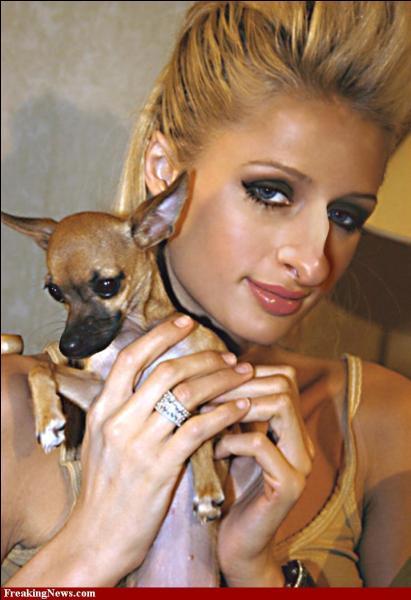 En plus de plaire à sa maîtresse Paris Hilton, le chihuahua Tinkerbell a une autre corde à son arc. Laquelle ?