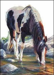Un cheval ne doit pas boire de l'eau fraîche d'une traite après le travail car ...