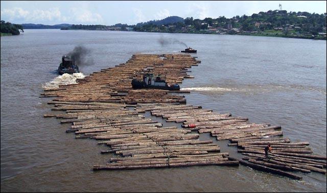 Cette pièce de bois, encore non équarrie, qui flotte avec d'autres sur un fleuve, porte le nom de :
