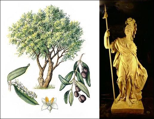 Quel est le surnom que l'on donne à l'olivier ?
