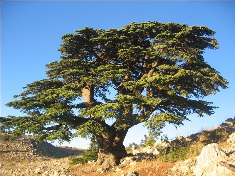 Quel type d'arbre représente l'un des symboles du Liban ?
